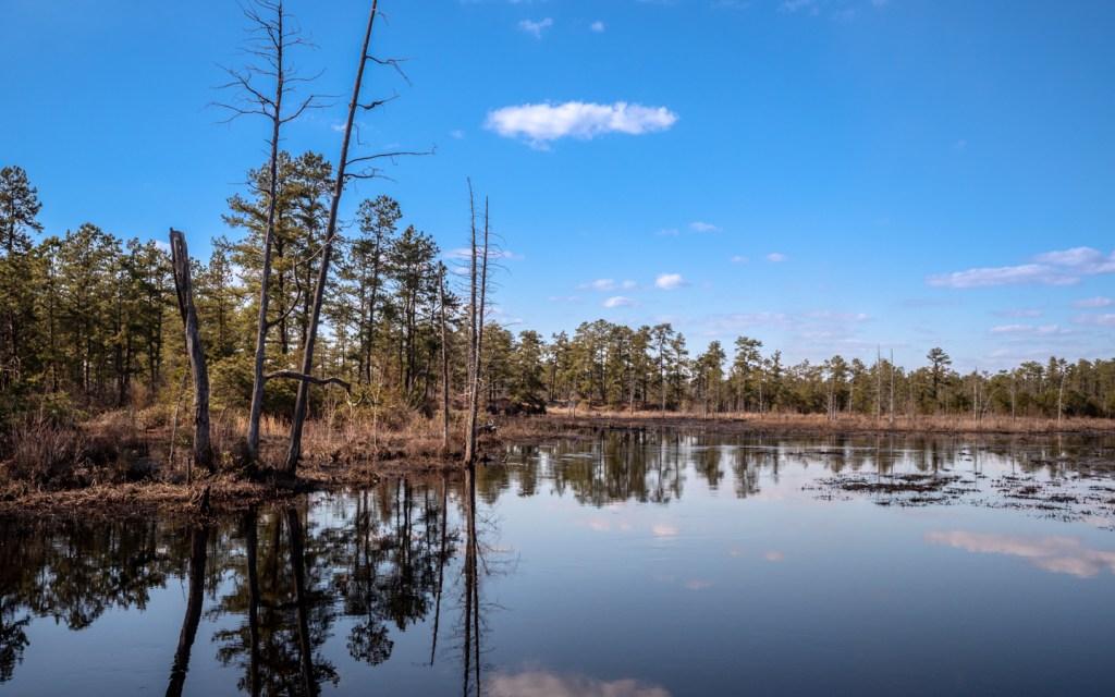 pine-lands--photo-3190123