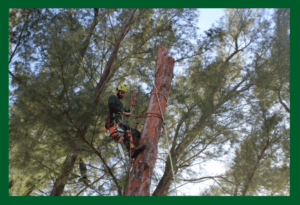 Tree Trimming Service in Pinellas County