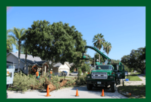 Palm Harbor tree service