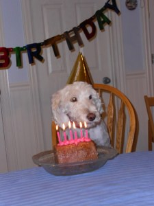 Sadie waits to blow out her candles