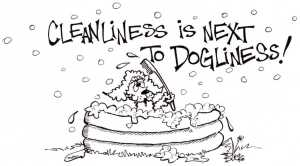 cleanliness is next to dogliness017