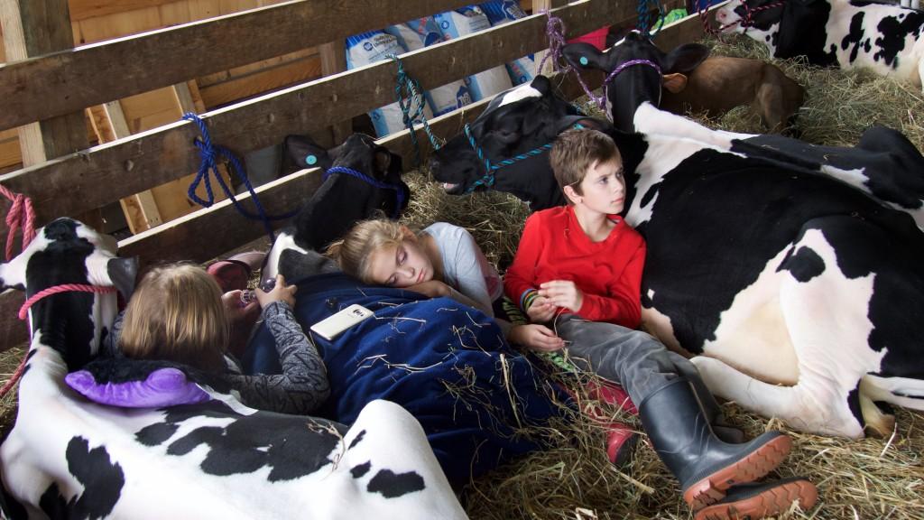 kids cows