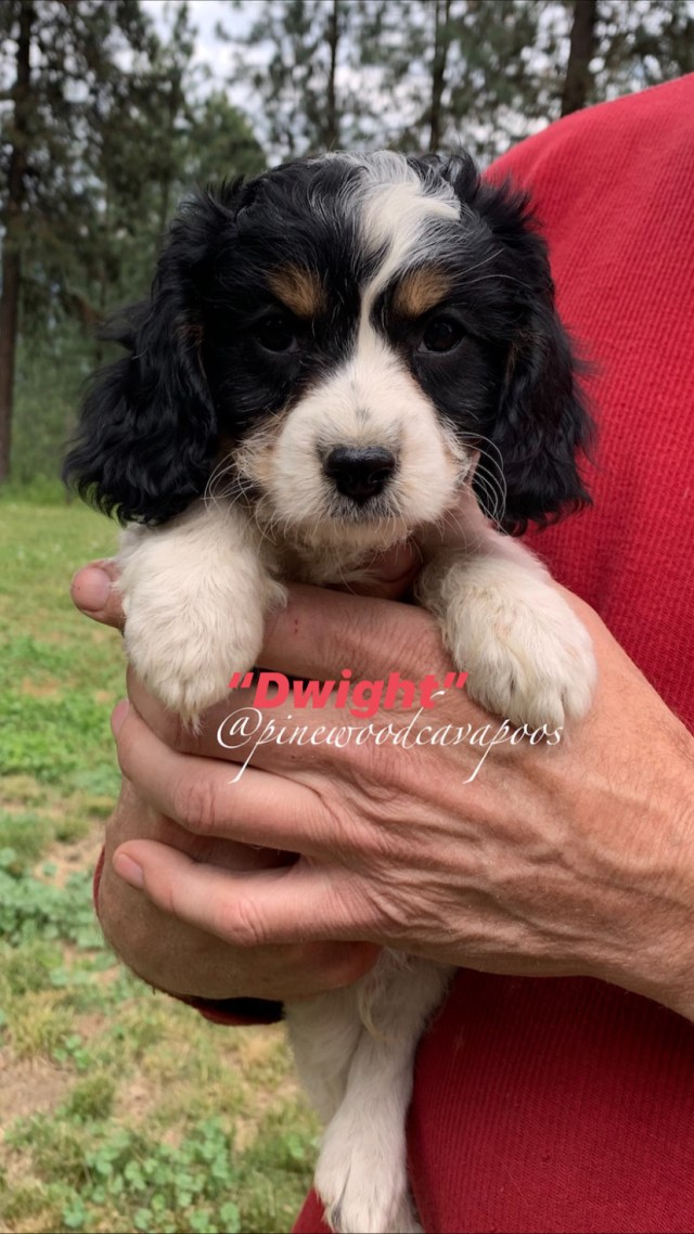 puppytri2