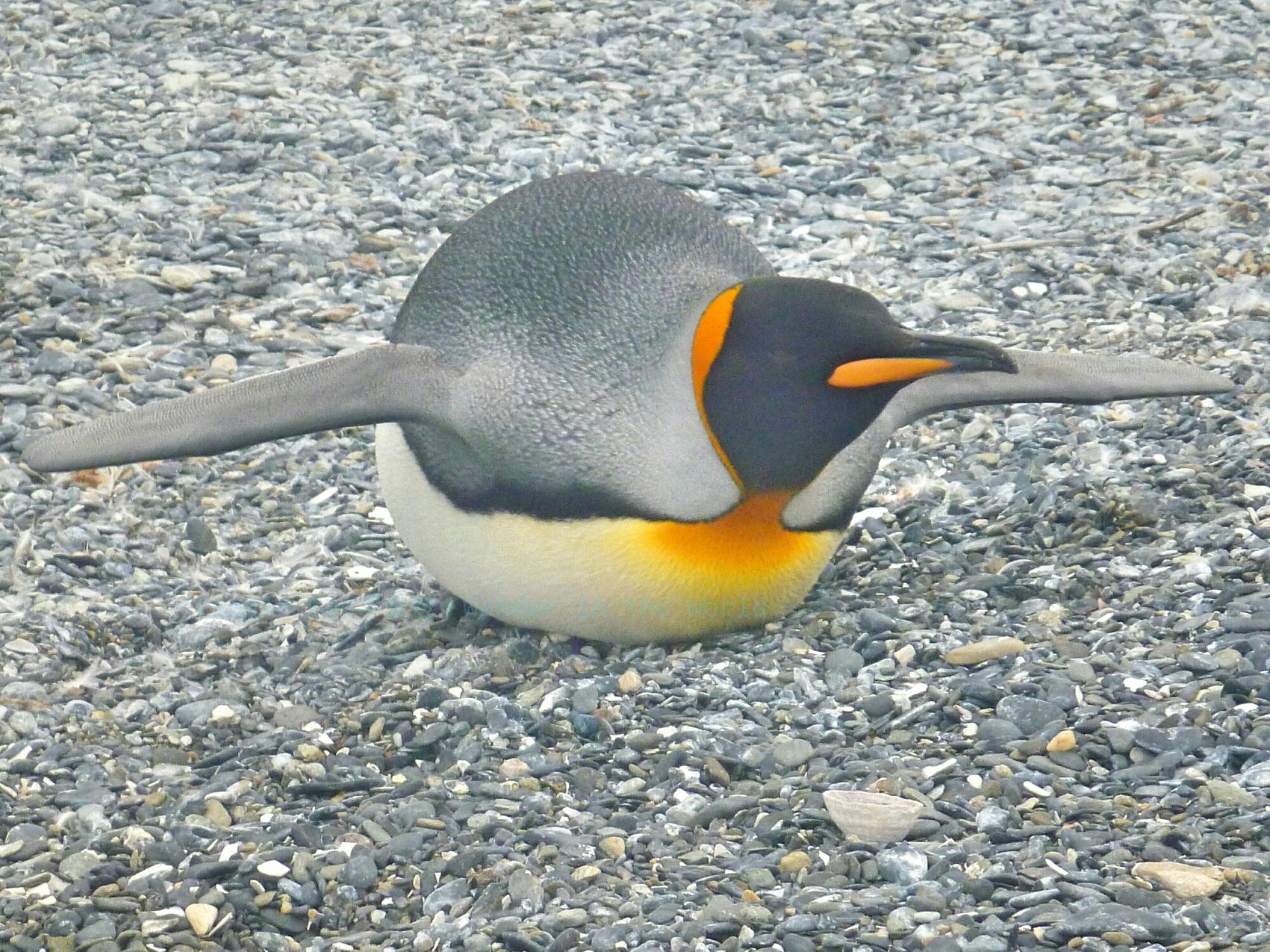 南極行-2016/2/24~3/5 之七 – 最終章/後記 | PíngĀn Bāo環遊世界中的平安包