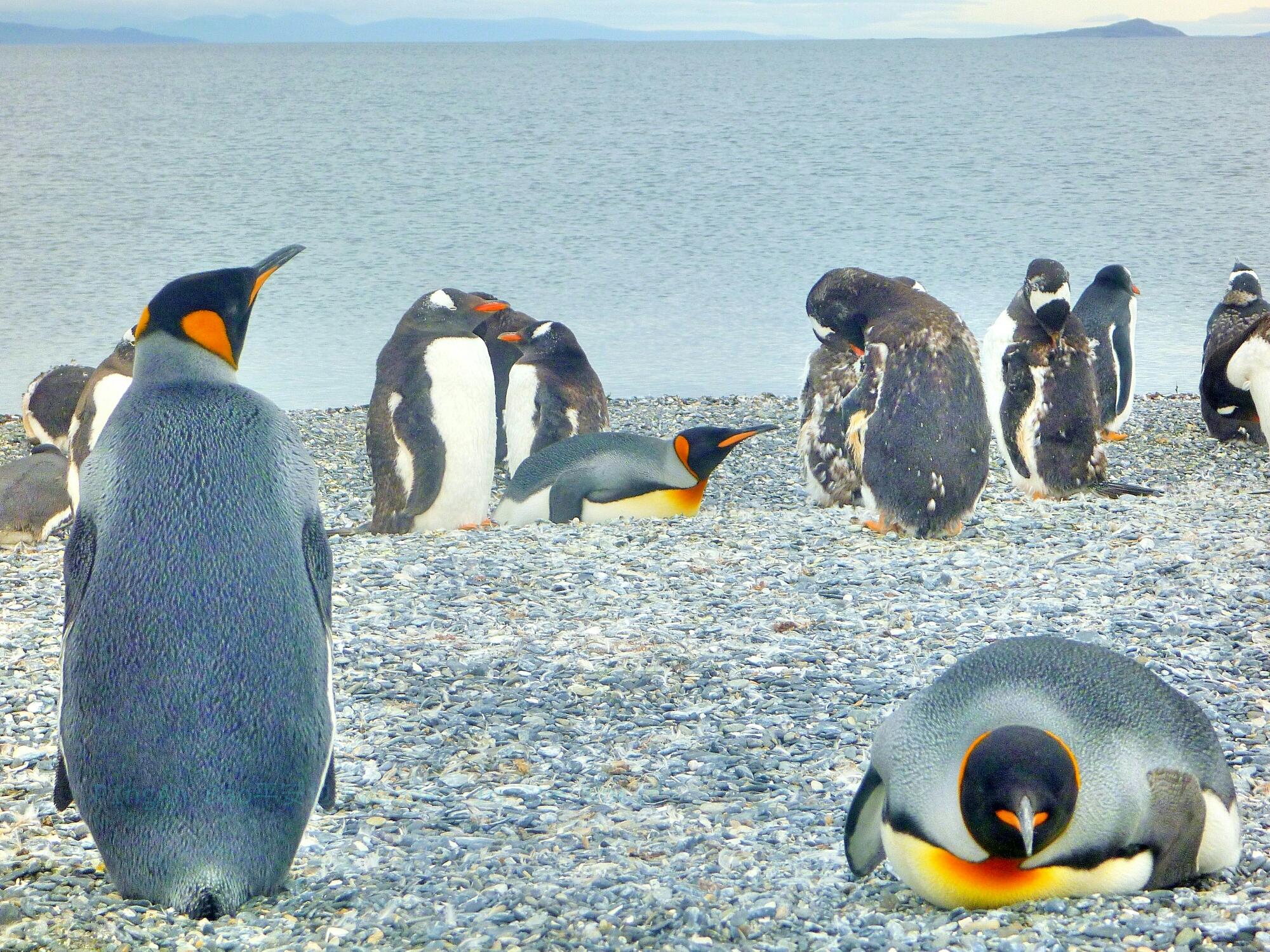南極行-2016/2/24~3/5 之七 – 最終章/後記   PíngĀn Bāo環遊世界中的平安包
