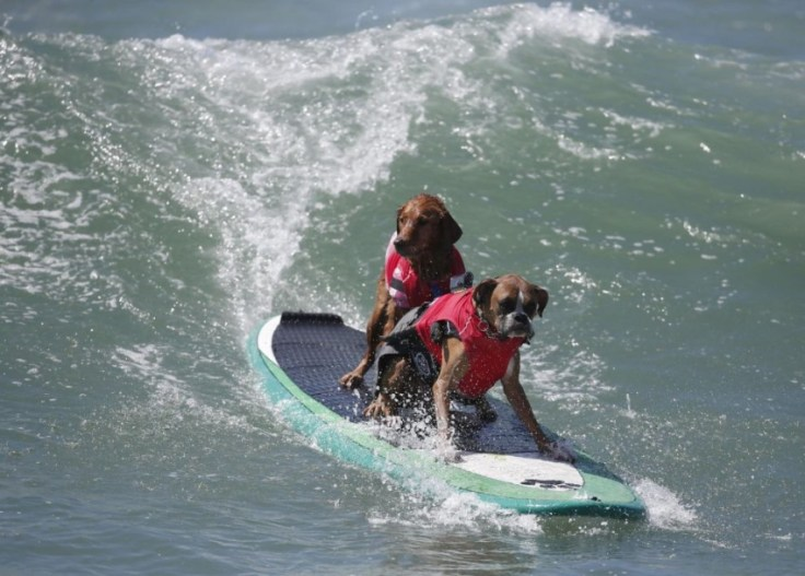 chien-en-surf_001