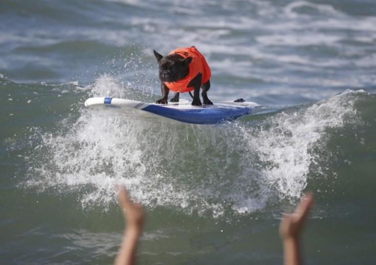 chien-en-surf_010