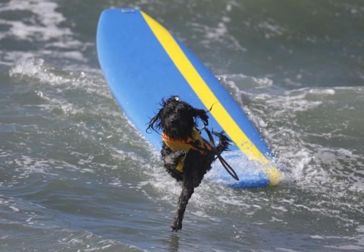 chien-en-surf_017