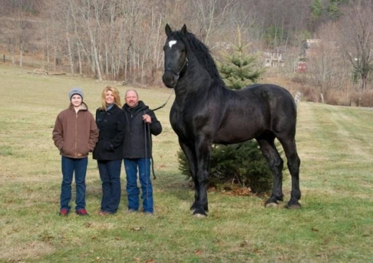 mon petit poney 42rt234rt_063