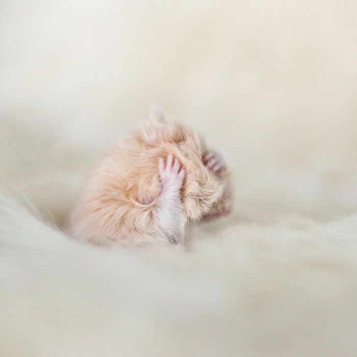 Une vie de Hamster