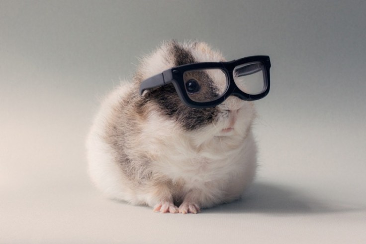 animaux a lunettes-01