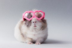 animaux a lunettes-03