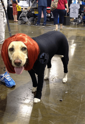 avengers assemble - version canine chien (3)