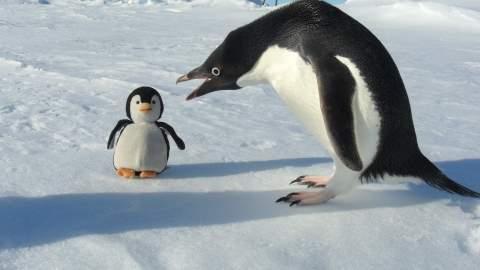 imposture pingouin (3)