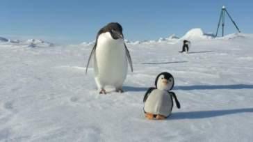 imposture pingouin (6)
