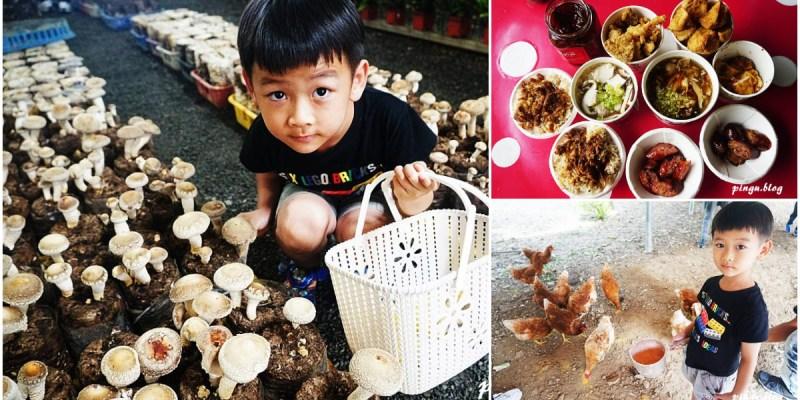 台中新社景點 百菇莊太空包採菇體驗 菇類美食品嚐的好地方