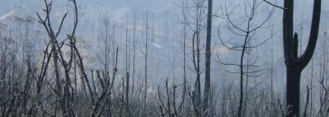 Incêndio de agosto de 2003