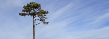 Árvores emblemáticas
