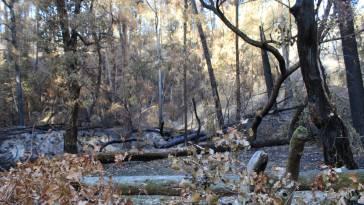 Vale dos Pirilampos após o incêndio