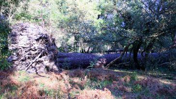 Árvores derrubadas pelo ciclone Gong