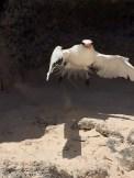 Taking flight (image:HCL)