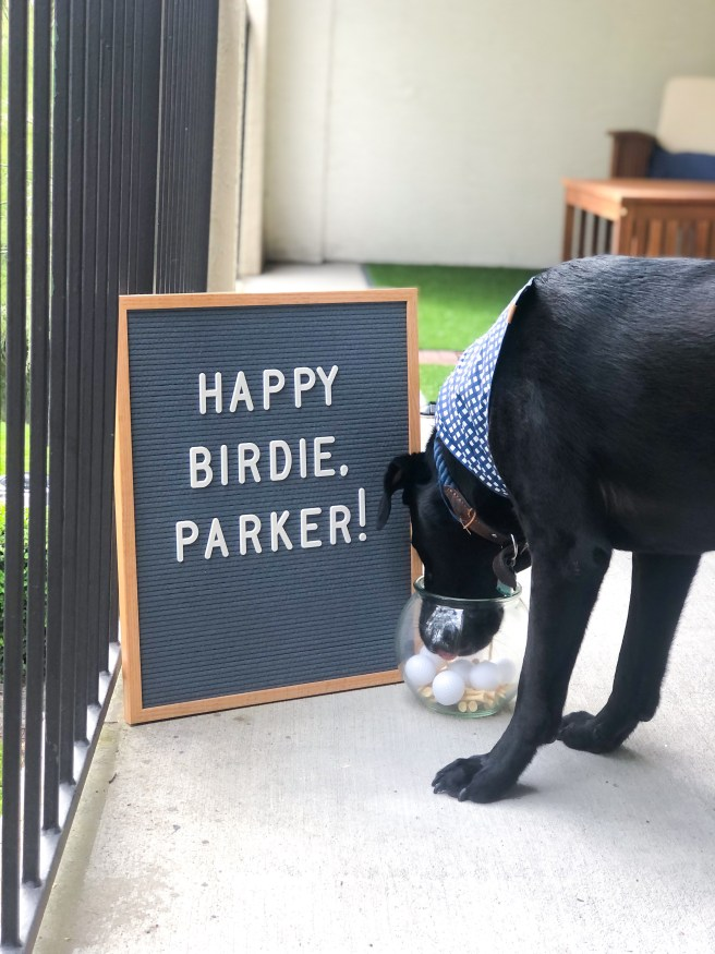 Black Lab with Party Signage - Pink Bows & Twinkle Toes