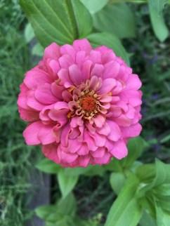 flower-1544252_640