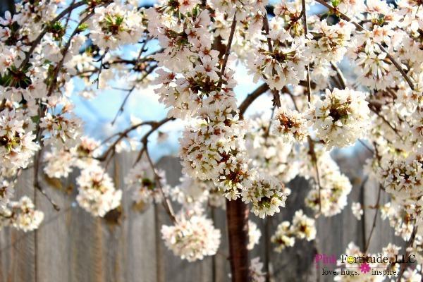 Cherry Tree and Spring Garden Tour