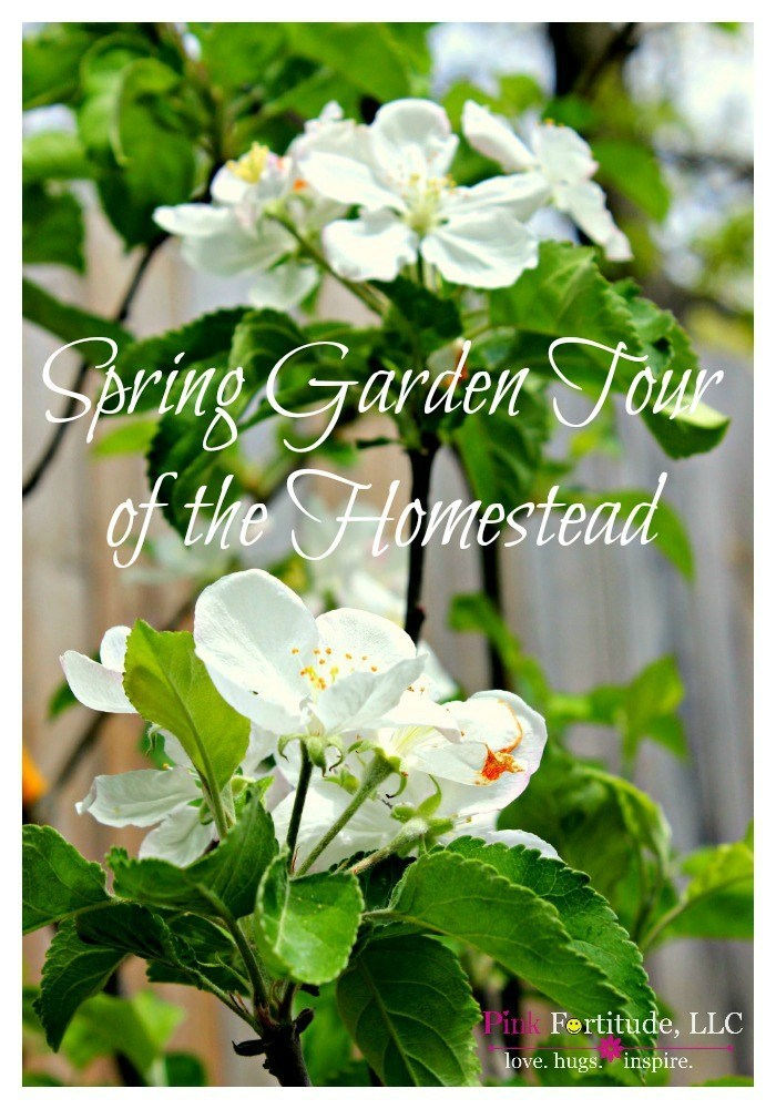 I'm so excited to share with you today the spring garden and flower tour of the homestead. All of the hard labor and long hours working on the landscaping have paid off. Sit back, relax, drink some coffee, and enjoy your private tour of the gardens and flowers.