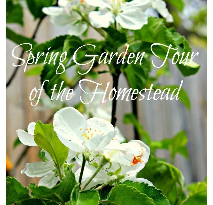 Spring Garden Tour of the Homestead