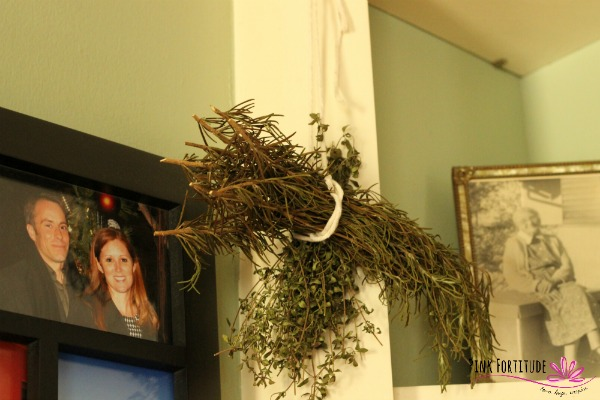 herbs 5