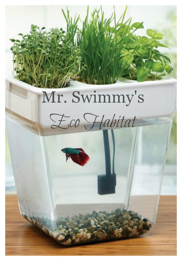 Every member of my family deserves a little something special, even Mr. Swimmy! He recently moved into his new home which is a super cool eco habitat. Check out Mr. Swimmy's new environmentally friendly and sustainable digs!