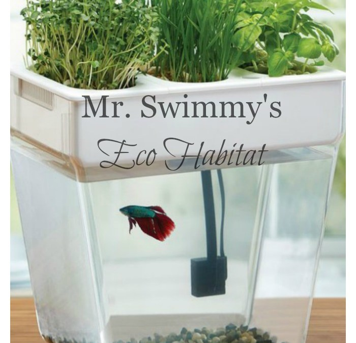 Mr. Swimmy's New Eco Habitat