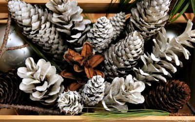 """How to Make """"Bleached"""" Pinecones Without Bleach"""