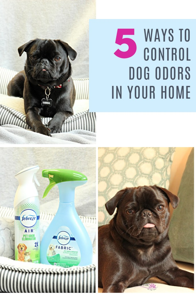 Cute puppy alert! When we got our Pug puppy, I had no idea how much odor a dog leaves behind. He's so little and adorable but his puppy funk lingers everywhere! As a Febreze partner, I'm excited to share five ways to help control dog odors in your home using the Febreze Pet Odor Eliminator collection. I will also debunk some myths about Febreze, its ingredients, and its safety.