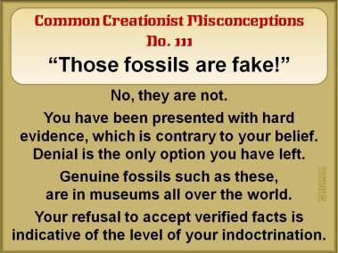 These fossils are fake.