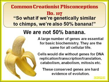 So what if we're genetically similar to chimps, we're also 50% banana.