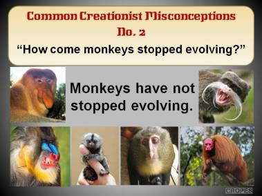 How come monkeys have stopped evolving?