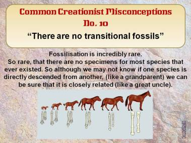 There are no transitional fossils.