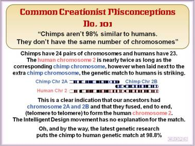 Chimps aren't 98% similar to humans. They don't have the same number of chromosomes.