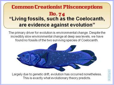 Living fossils, such as the Coelocarth are evidence against evolution.