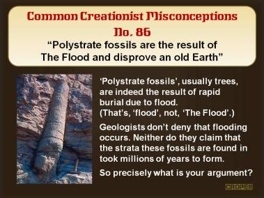 Polystrate fossils are a result of The Flood and disprove an old Earth