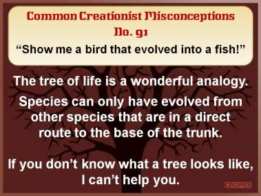 Show me a bird that evolved into a fish