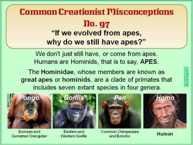 If we evolved from apes, why do we still have apes?