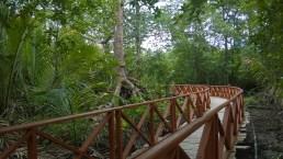 mangrove-walkway-2