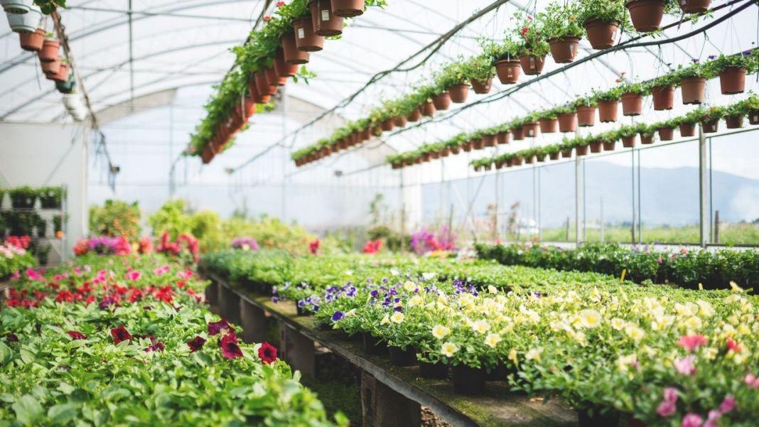 Plant Nurseries In Thrissur
