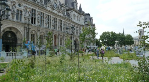 Wildflower Garden at the Hôtel de Ville