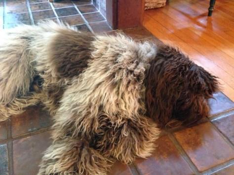 Sleepy Truffle