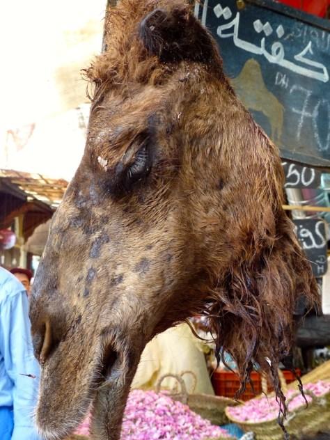 Fes Camel Souk