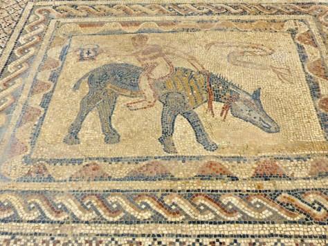 Volubilis Mosaics 2